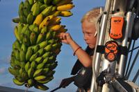 Bananracet kan börja