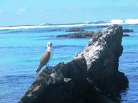 Båtsafari på Galapagos