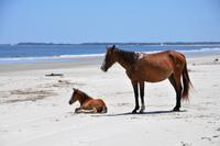 De vilda hästarnas ö