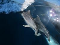 Delfiner till frukost, lunch och middag