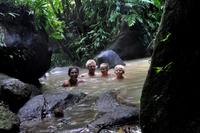 Doften av Dominica