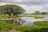 Långfredag på savannen