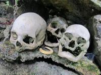 Dödskalleön - där jägare och byte delar grav
